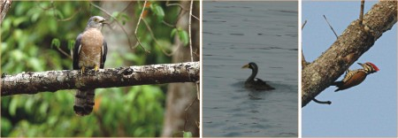 birds of sunderbans