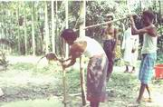 Traditional drilling - bamboo frame, water and pipe movement can drill upto 150 feet or more and also sampling, Noakhali!